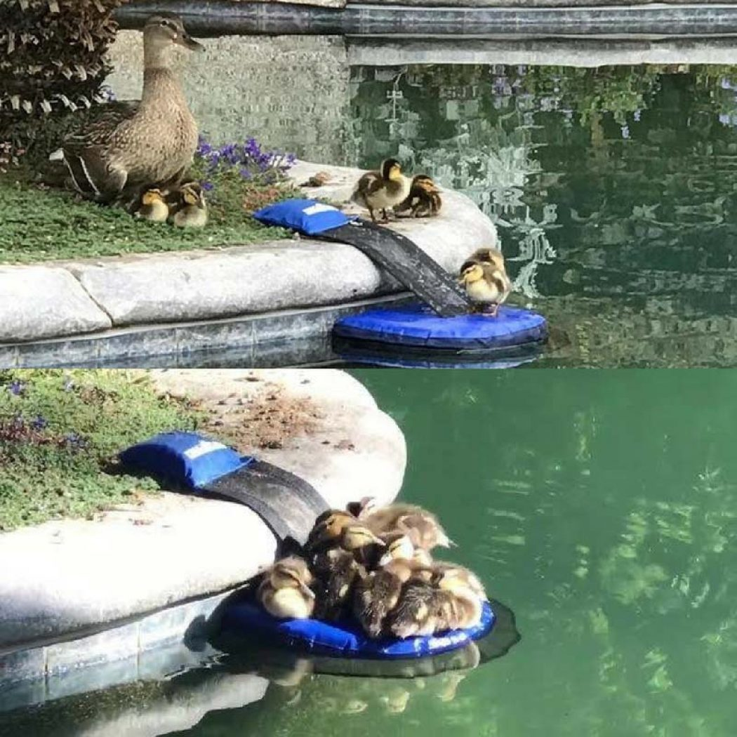 Froglog Animal Saving Escape Ramp For Pools Does the Critter Saving For You